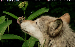Gnome Shell @ Laptop
